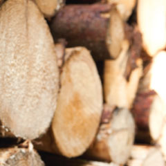 Holzstrucktur